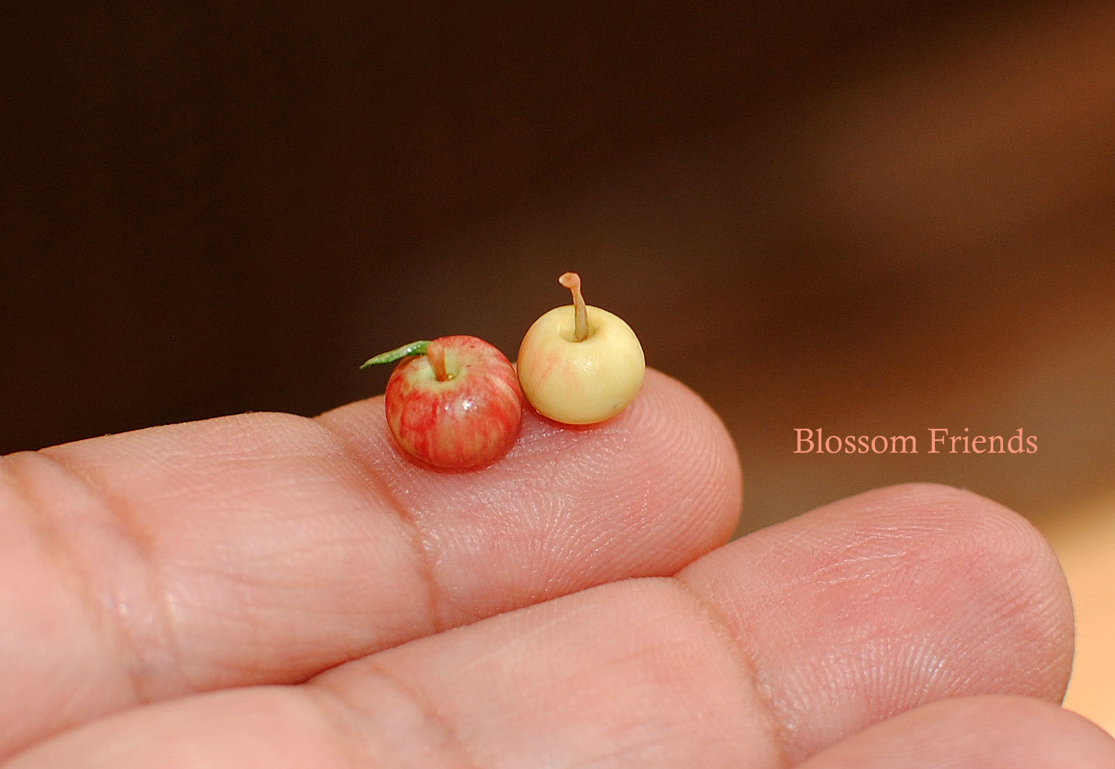 my apples3_edited-1